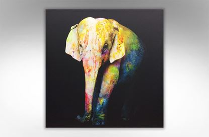 Picture of Vivid Elephant Print