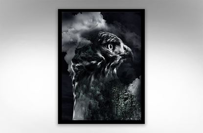 Picture of Daized Eagle