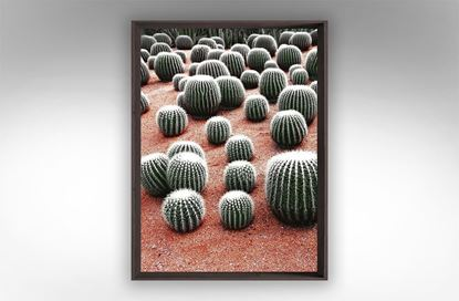 Picture of Earthy Cactus