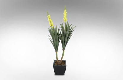 Picture of Desert Flower 150cm