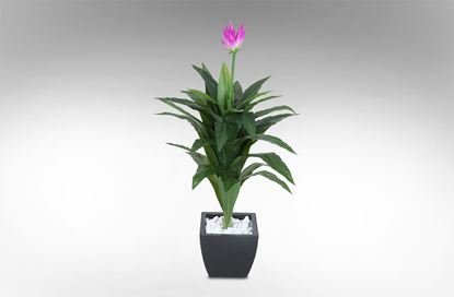 Picture of Long stemmed Purple Lilly