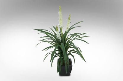 Picture of Rainforest Orchid White 140cm