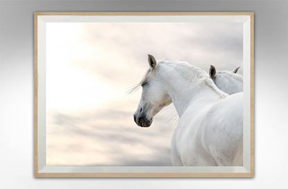Picture of Canter Gaze