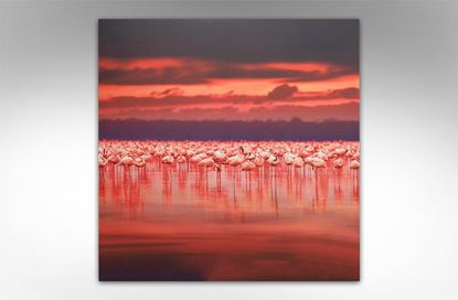 Picture of Flamingo