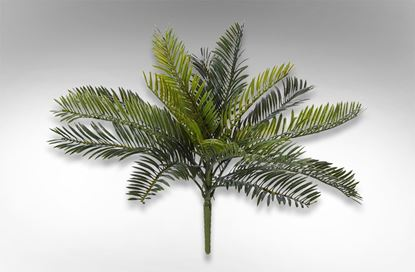 Picture of Cycas Bush