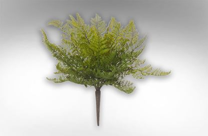 Picture of Leather Fern Bush