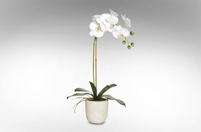 Picture of Orchid - Stone Pot 14x30x54cm