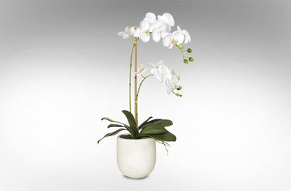 Picture of Orchid - Stone Pot 18x35x60cm