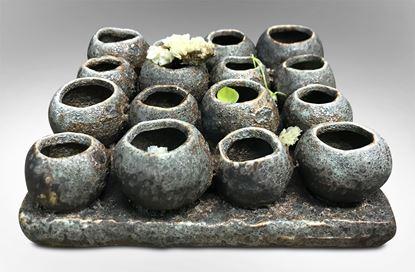 Picture of Pompeii Gumnuts