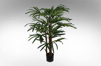 Picture of Rhapis Palm 110cm