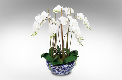 Picture of Dynasty Orchid 92cm