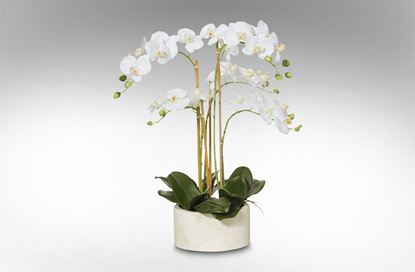 Picture of Cylinder Pot Orchid Large