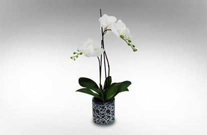 Picture of Dynasty Orchid Small
