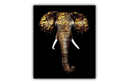 Picture of African Elephant
