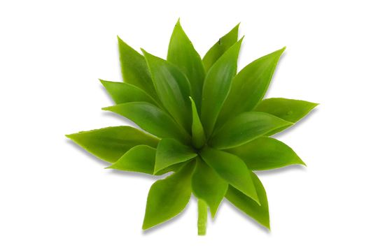 Picture of Agave Mini