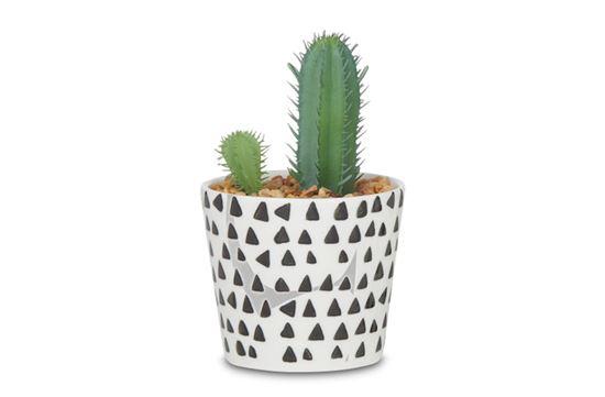Picture of Sia Cactus