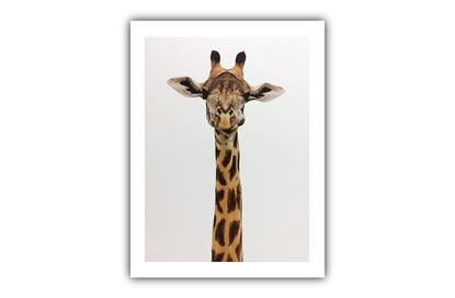 Picture of Gerry Giraffe
