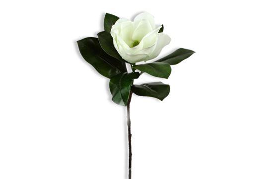 Picture of Magnolia 70cm
