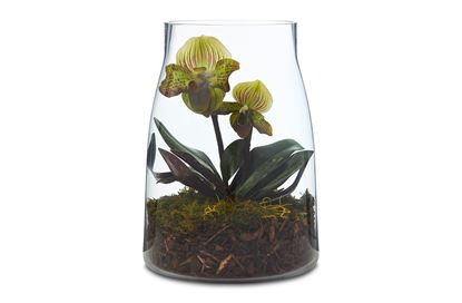 Picture of Dome Orchid