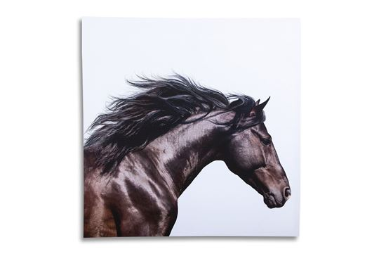 Picture of Galloping Horse