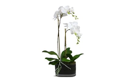 Picture of 50cm Glass Orchid