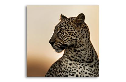 Picture of Leopard on Glass