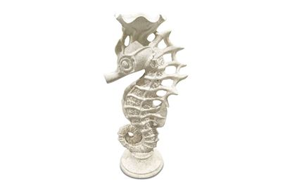 Picture of Shelley Seahorse