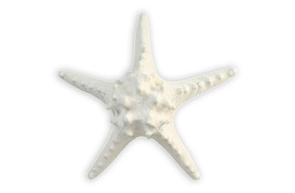 Picture of Reef Starfish