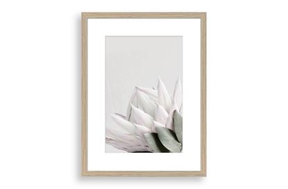 Picture of Protea Cluster A