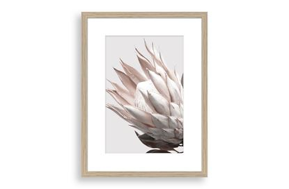 Picture of Protea Cluster B