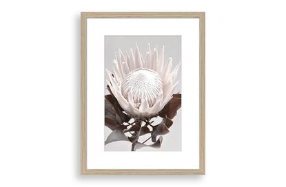 Picture of Protea Cluster D