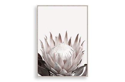 Picture of Protea Large