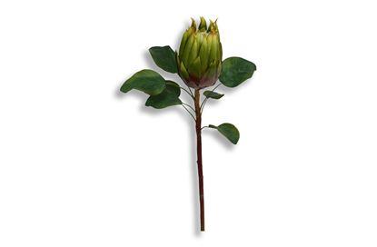 Picture of Protea