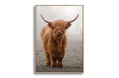 Picture of Billy Bovine