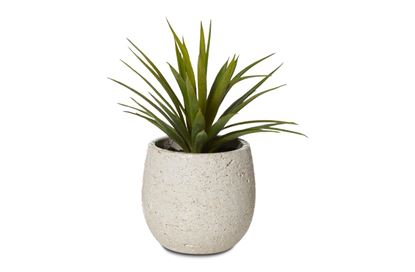 Picture of Agave Small Pot