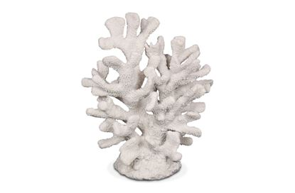 Picture of Coral 36cm Staghorn
