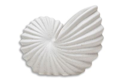 Picture of Nautilus Shell
