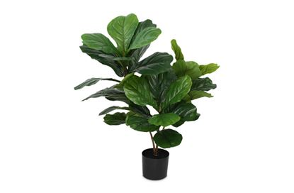 Picture of Fiddle Tree 90cm