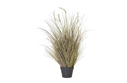 Picture of Fountain Grass Pot