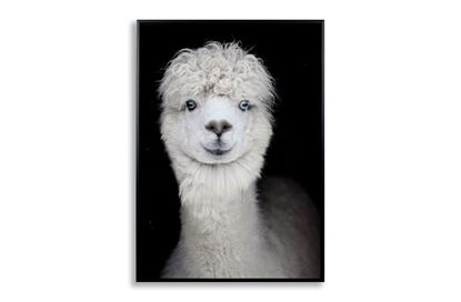Picture of Llama Canvas