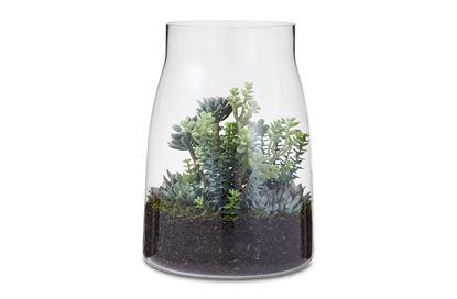 Picture of Crassula Succulent Mix