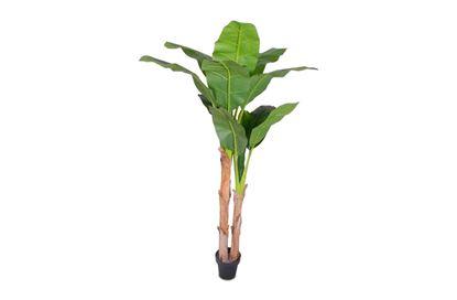Picture of Banana Tropics 180cm