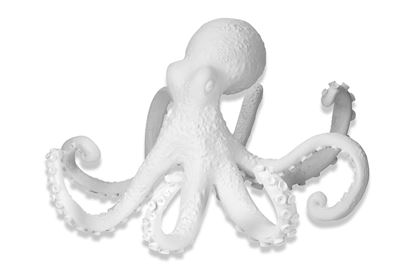 Picture of Coastal Octopus