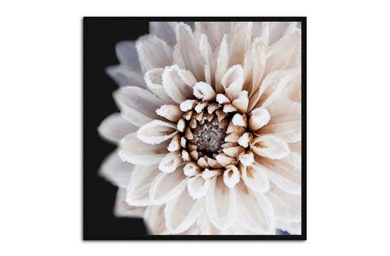 Picture of Coco Flower 100 x 100 B/F