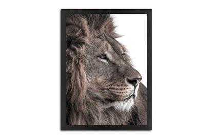 Picture of Feline 170 x 120 B/F