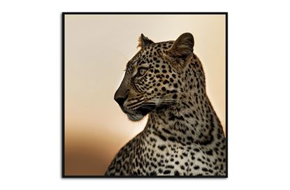Picture of Leopard 120 x 120 B/F