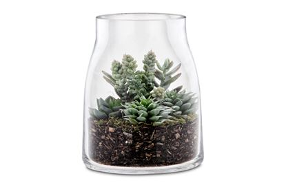 Picture of Tropical Terrarium