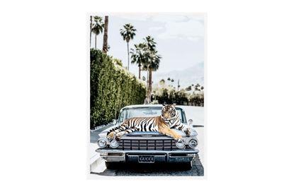 Picture of Gucci Tiger 130 x 95 W/F