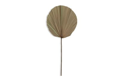 Picture of Circle Palm 73cm