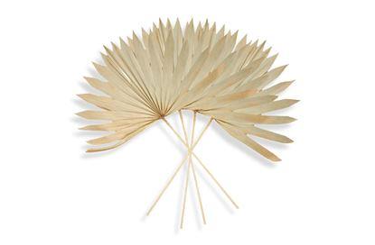 Picture of Palm Natural Sun Mini